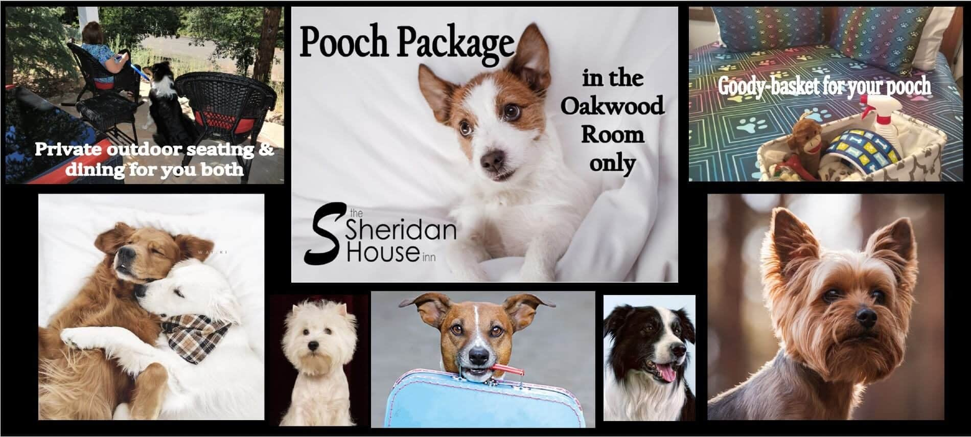 collage of pictures of variety of dogs, a patio with chairs and a person and a dog, a bed with a doggy basket of goodies